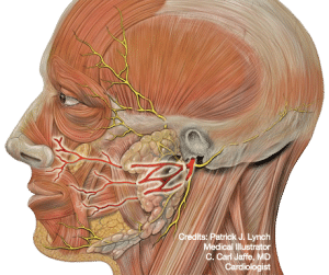 medical illustration of painful facial nerves