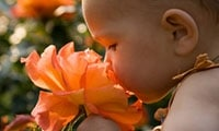 baby girl smelling giant orange rose