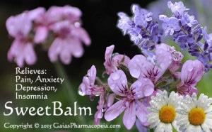 eSweetBALM-RoseGeranium+Lavender+RChamomile